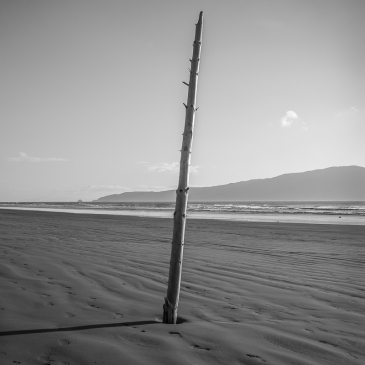 Waikanae Beach - NZNK169341